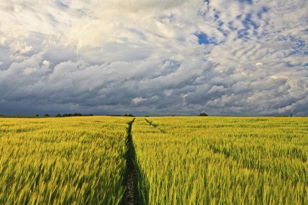 graanveld belgie