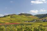 Duitse wijngaard in herfstkleuren