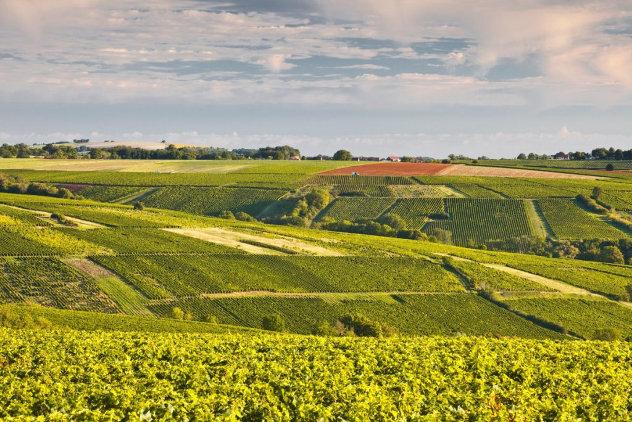 Wijngaarden Sancerre