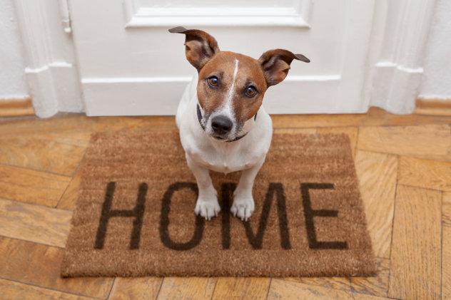 hondje op deurmat