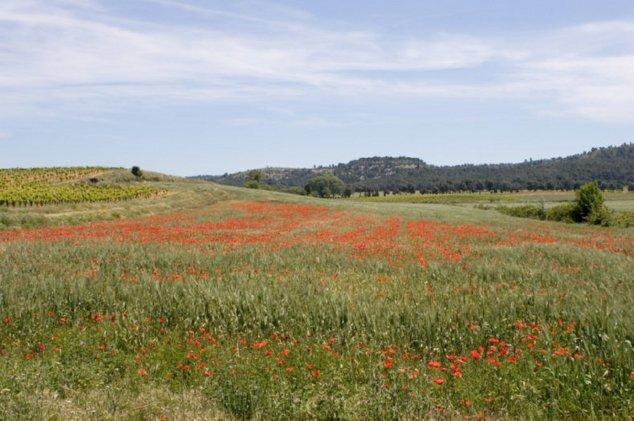 Landschap met papavers en grassen in Corbières – Frankrijk. Begin zomer.