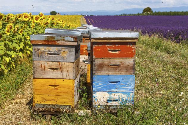 Bijenkorven in de Provence