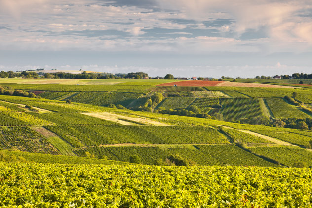 Vineyards in Sancerre
