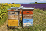 Bee hives in Provence