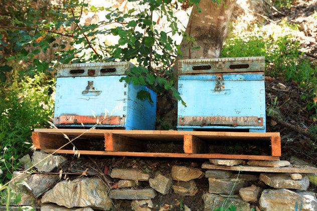 kasten voor het houden van bijen