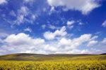Heuvel landschap hongarije