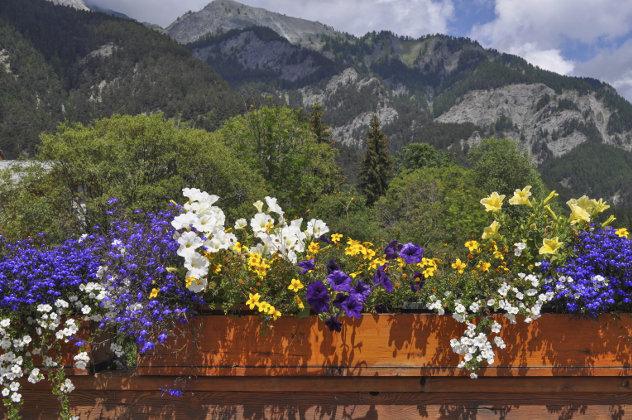Bloemen in Italiaans landschap in Friuli-Venezia Giulia