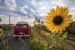 Volkswagen camper met zonnebloem