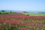 Toscaanse platteland in de lente