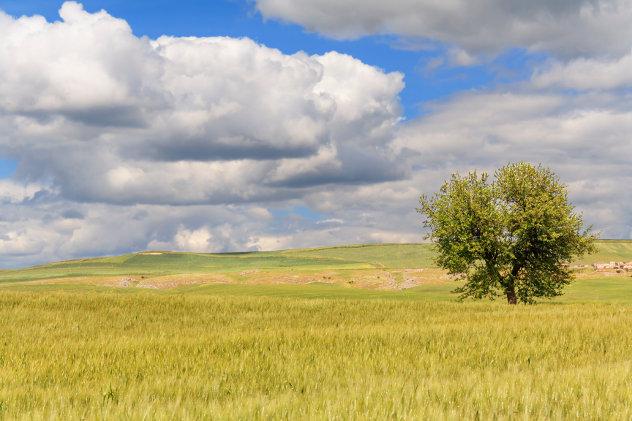 Landschap tussen Puglia en Basilicata