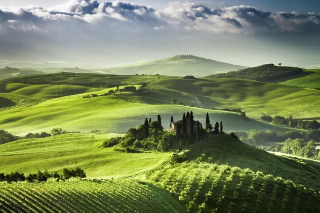 Zonsopgang Olijven boomgaard Italie