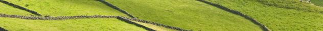 Detail van een  weide op de Azoren