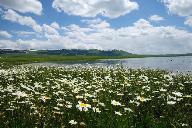 Veld met lentebloemen nabij Erzurum in Anatolië, Turkije